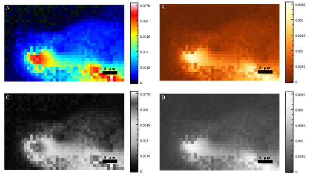 Vespucci: A Free, Cross-Platform Tool for Spectroscopic Data
